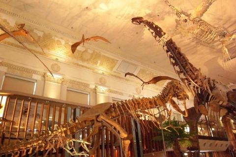 National Taiwan Museum - Natural History Branch